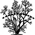 Rejuvenation Pruning