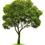 Should I Remove my Tree?